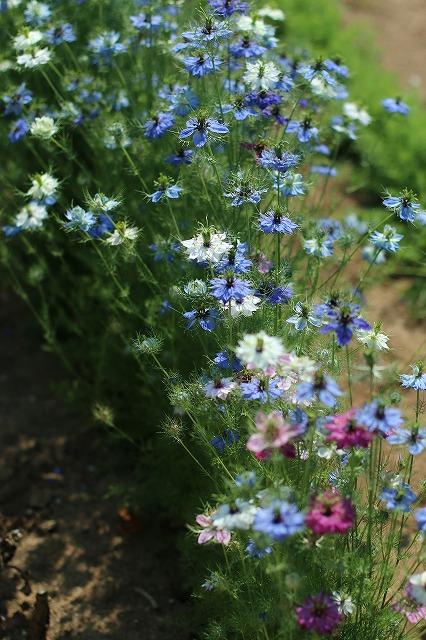 IMG_5183ハーブ庭園