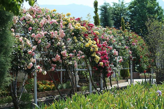 IMG_5186ハーブ庭園