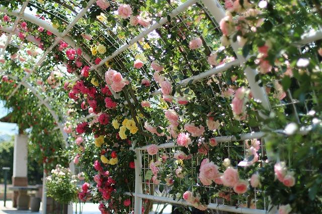 IMG_5188ハーブ庭園