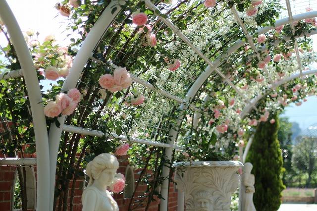 IMG_5190ハーブ庭園