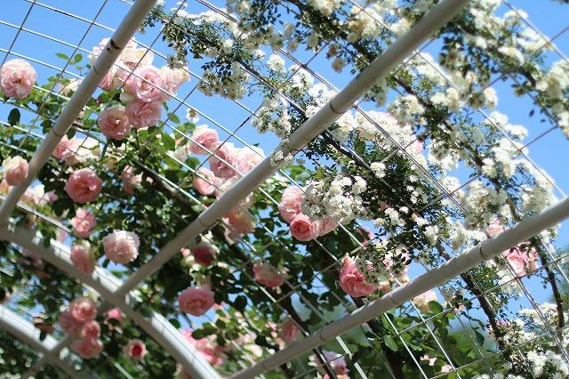 IMG_5195ハーブ庭園