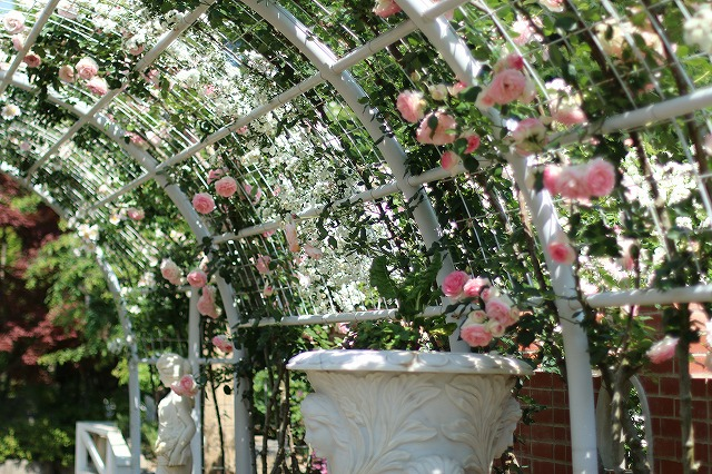IMG_5197ハーブ庭園