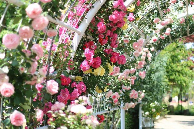 IMG_5198ハーブ庭園