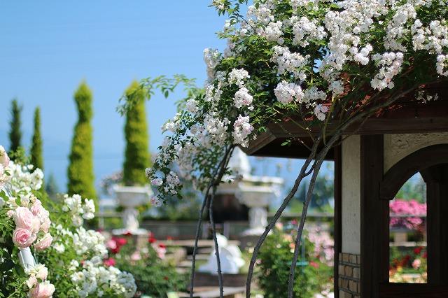 IMG_5205ハーブ庭園