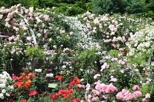 IMG_5213ハーブ庭園