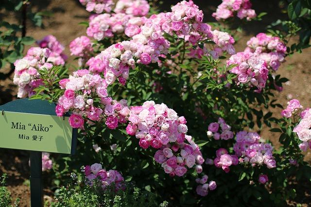 IMG_5217ハーブ庭園