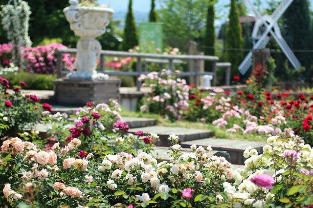 IMG_5222ハーブ庭園