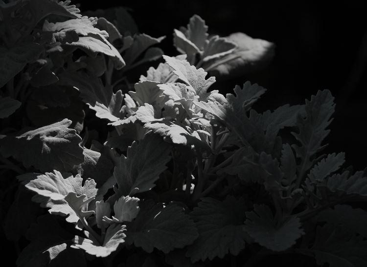 IMG_1864_R.jpg