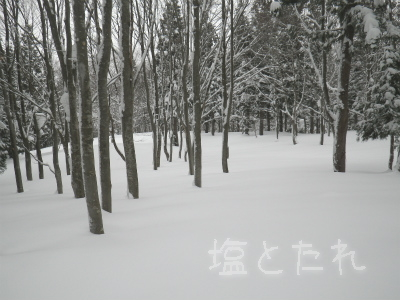 IMGP0016_201501_23_26_入広瀬