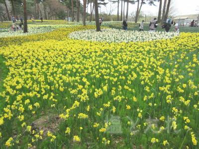 IMG_0173_20150419_02_国立ひたち海浜公園