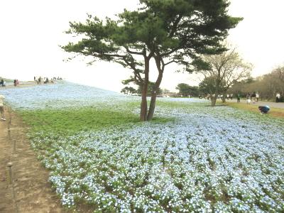 IMG_0208_20150419_02_国立ひたち海浜公園