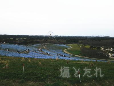 IMG_0215_02_20150419_02_国立ひたち海浜公園