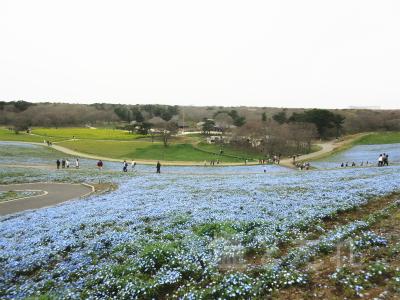 IMG_0216_20150419_02_国立ひたち海浜公園
