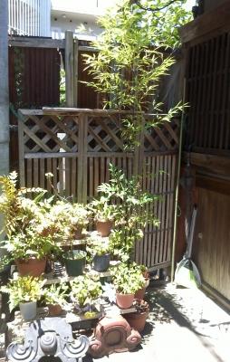 nagaya3.jpg