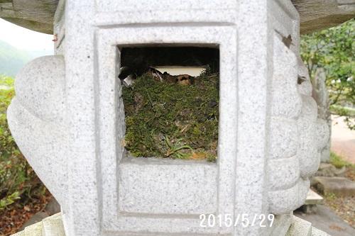 2015529鳥の巣