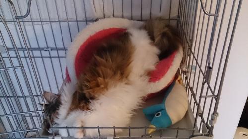 小豆猫14