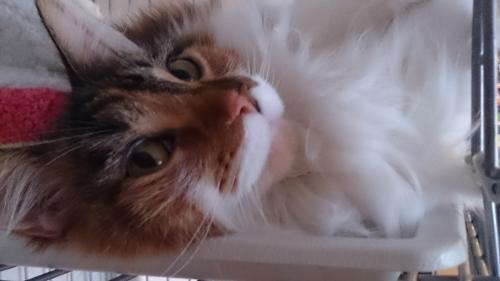 小豆猫16