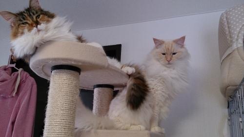 白玉猫25
