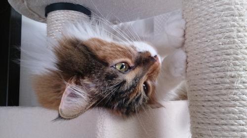 小豆猫42
