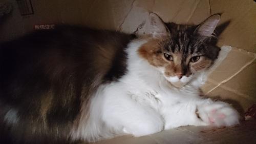 シャンプー後疲労小豆猫