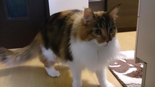 小豆猫28