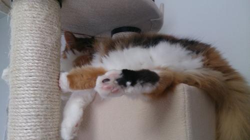小豆猫39