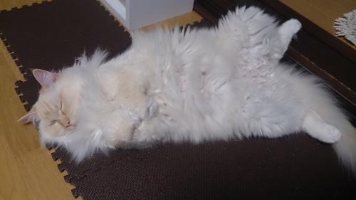 白玉猫40
