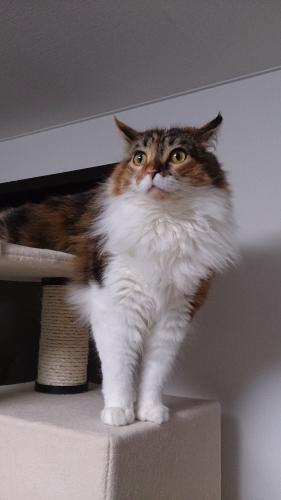 小豆猫44