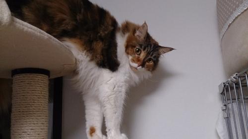 小豆猫46