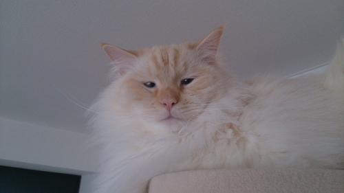 白玉猫48