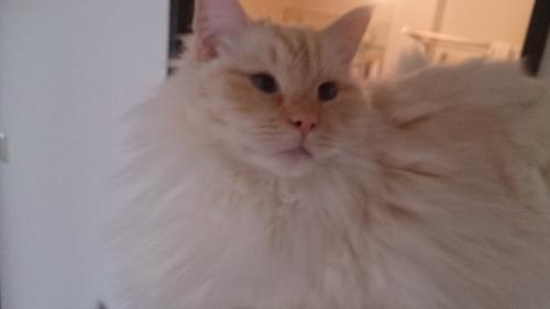 白玉猫49