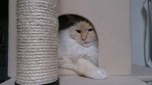 白玉猫53