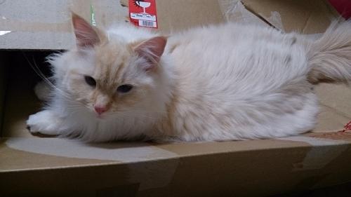 白玉猫57