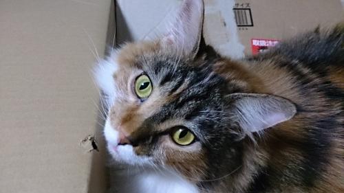 小豆猫65