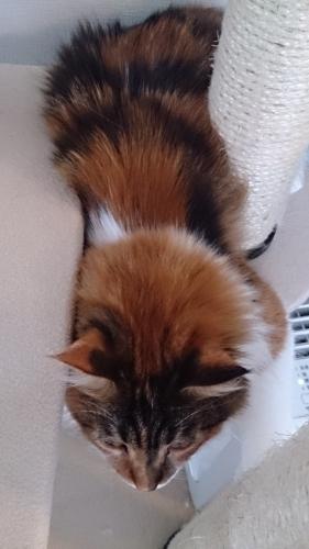 小豆猫66