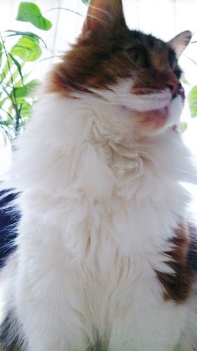 小豆猫73