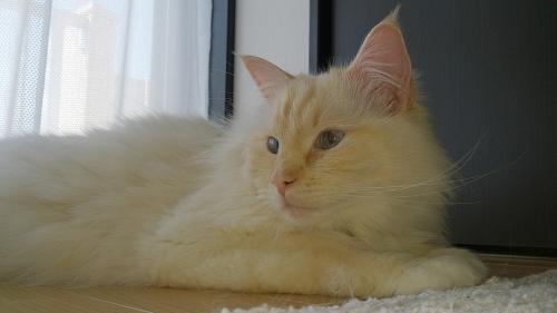 白玉猫69