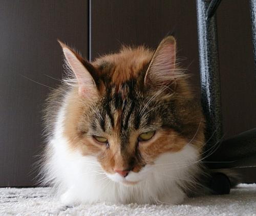 小豆猫78