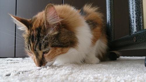 小豆猫76