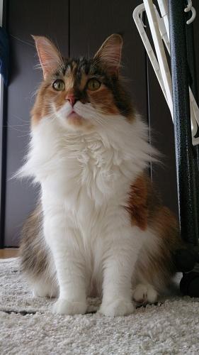 小豆猫85