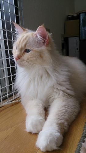 白玉猫67