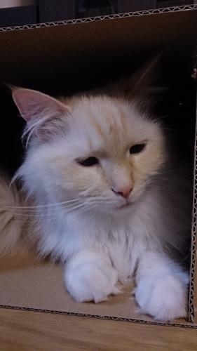 白玉猫73
