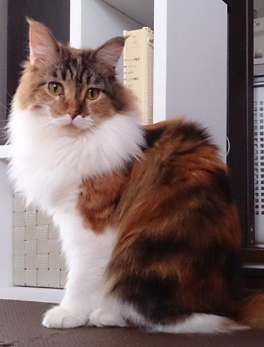 小豆猫12