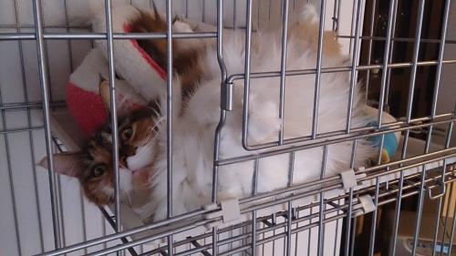 小豆猫17