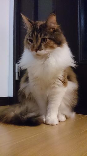 小豆猫19