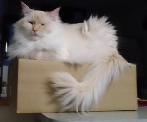 白玉猫24