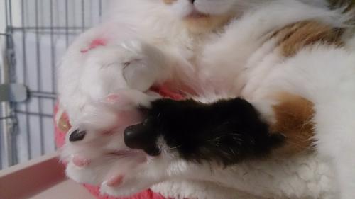 小豆猫26
