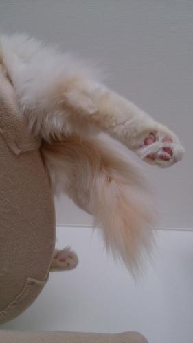 白玉猫26
