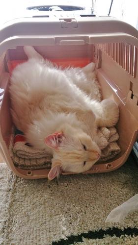 本日の白玉猫1