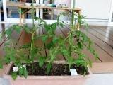 植物は (23)